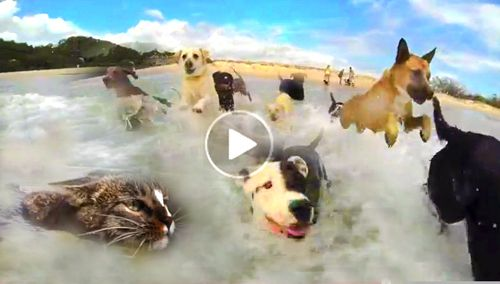 Youtube funny dog video of dogs having a