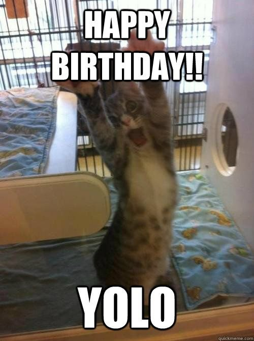 Collect the Wonderful Funny Cat Memes Birthday