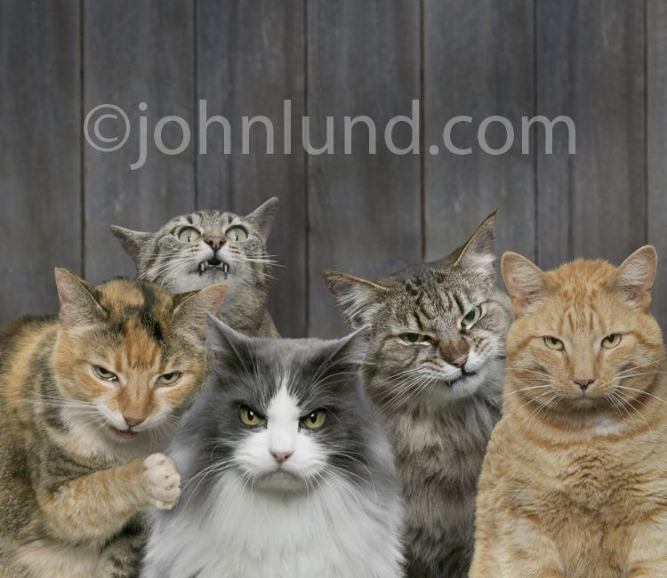 Funny Angry Cats