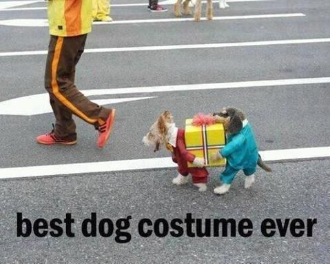 great costume for dogs