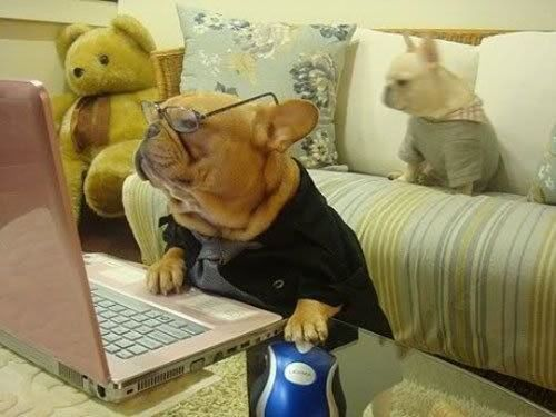funny dog by puter How do i open a new tab dog