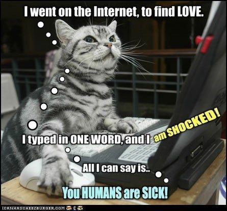 web gross internet pron shocked love Cats