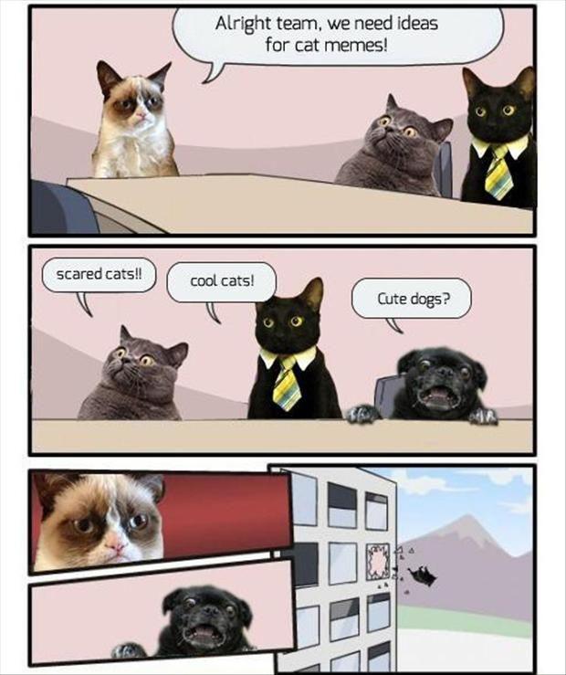 Alright team We Need Cat Meme