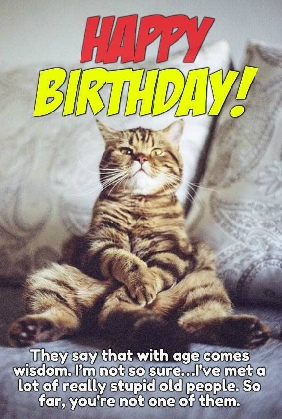 Happy Birthday Cat meme Happy Birthday Cat Meme 3