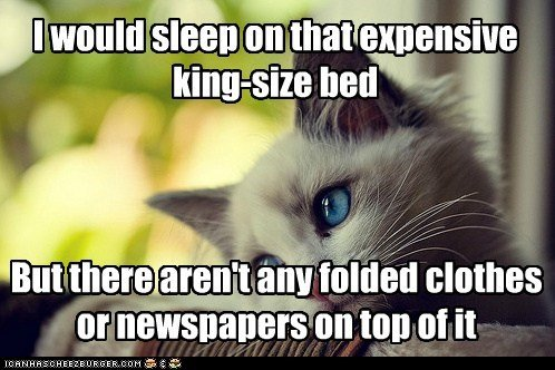 annoying beds Cats clothing first world cat problems First World Problems huge King Size Memes newspapers