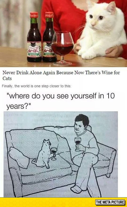 funny cat drinking wine sofa