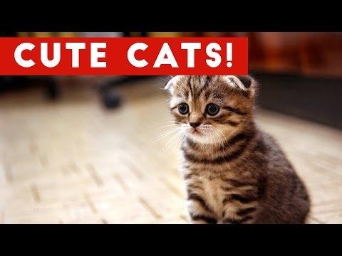 Cutest Cats pilation 2017