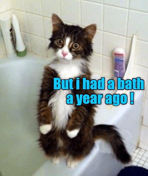 cat year had bath ago caption