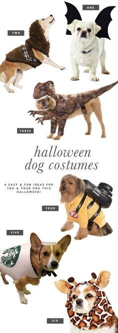 6 Dog Halloween Costume Ideas for You & Your Pooch