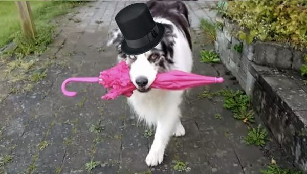 Dog s Amazing Dance Moves with Umbrella Inspire Cute Video Remix