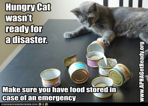 APHA Hungry Cat