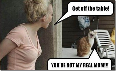 Download the Awesome Funny Pictures Cat and Human Argue