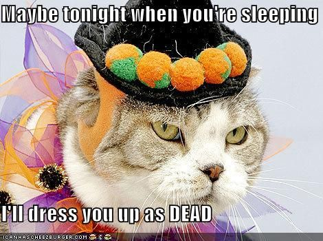 Dressing up can be fun especially if your cat is accepting of it It s very adorable This video shows many cute costume idea s and the cats that are