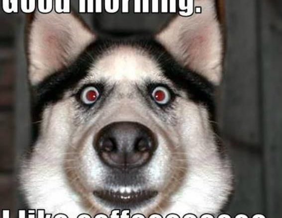 Download the Awesome Pics Of Funny Dog Memes