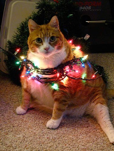 Very Creative and Funny Christmas Cat Funny Christmas Cat Graphics best Christmas Cat pictures funny Christmas Cat gallery funny Christmas Cat ideas
