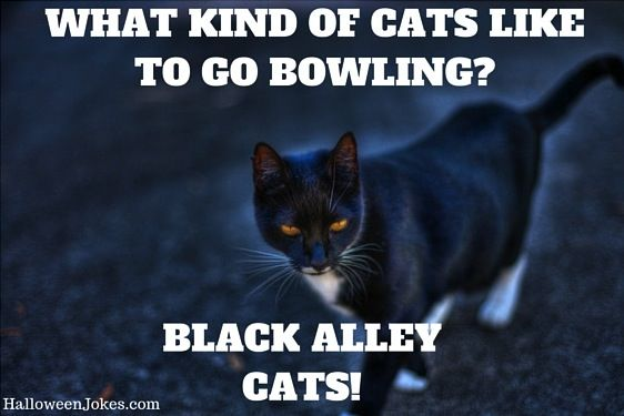 Halloween Joke Black cat Meme 2 What kind of cats like to go bowling