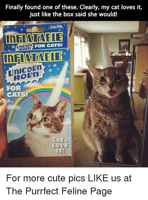 Cat Unicorns