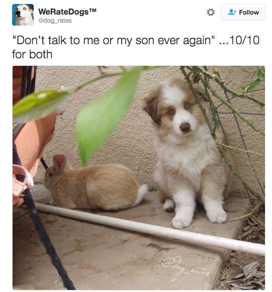 Dog and bouncy dog — 10 10