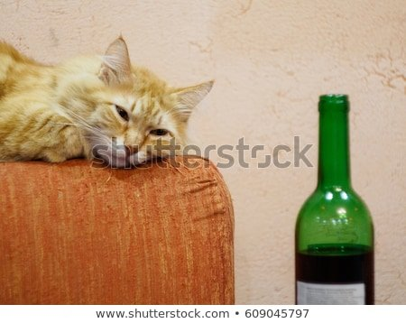 Funny cat looking to wine bottle