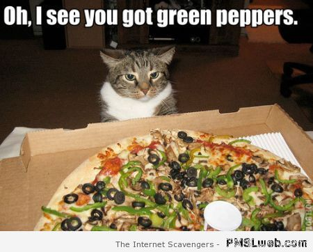 Funny cat pizza meme at PMSLweb