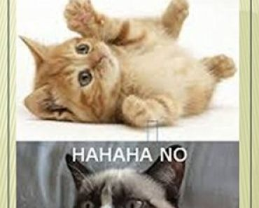 Download the Best Of Cat Memes Hilariously Funny