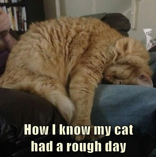 Download the Best Of Funny Bad Day Cat Memes
