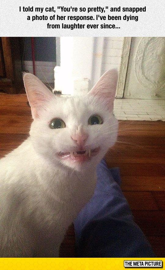 You re So Pretty – The Meta Picture Cat Memes Hilarious Cute Cat Memes