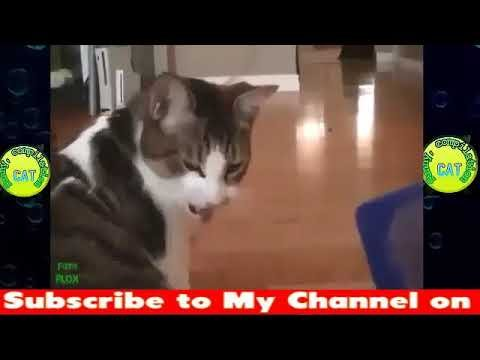 Try Not To Laugh Challenge Funny Cat & Dog Vines pilation 2018 Funny Cats Vine pilation