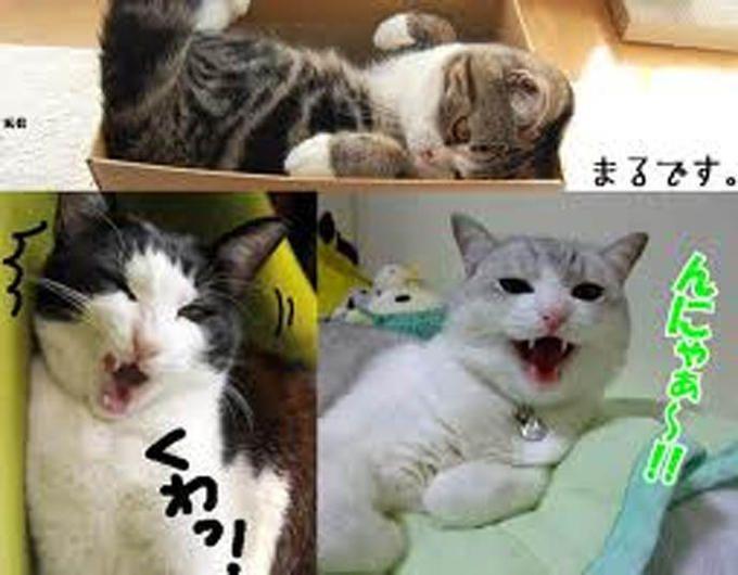 Early Japanese Cat Memes image macros
