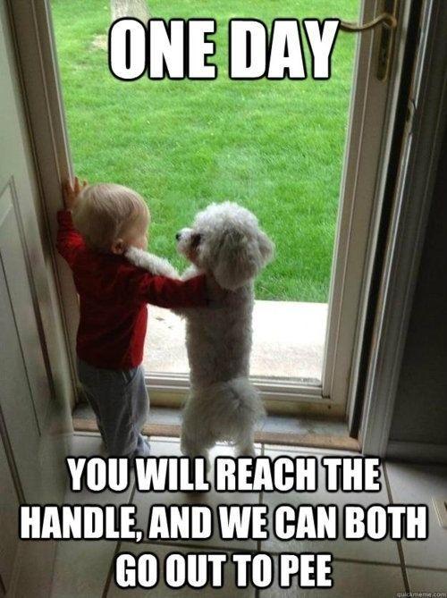 lmao by Alrep Funny Dog Memes Dog Humor Pet Memes Dog Funnies