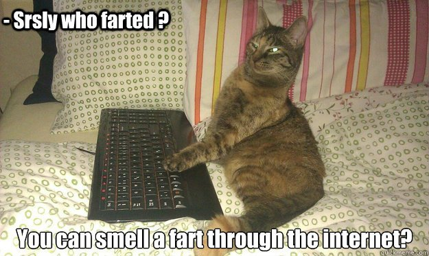 Download the Best Of Funny Farting Cat Pictures