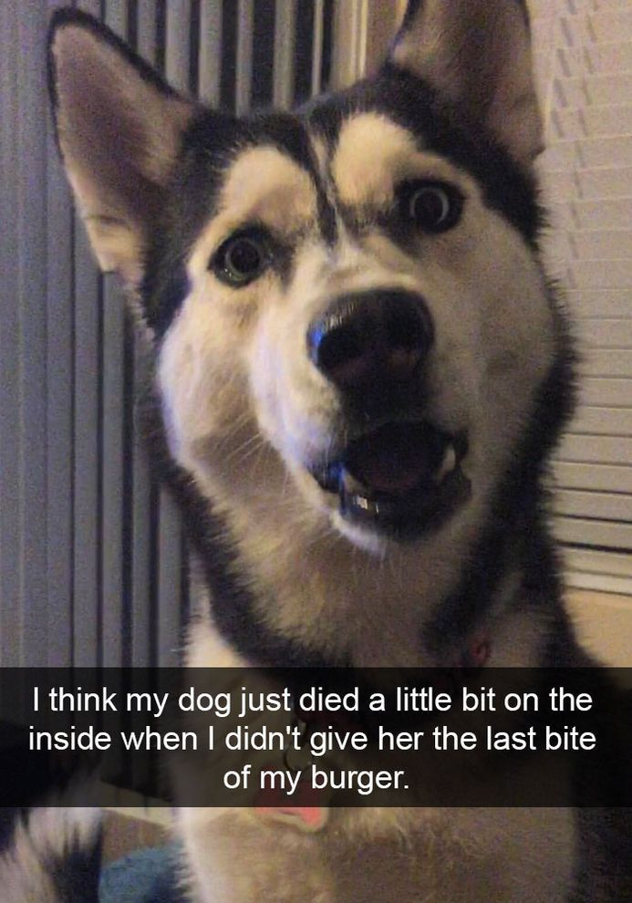 90 Funny Dog Snapchats Dog Quotes Funny Dog Memes Funny Dogs Cute