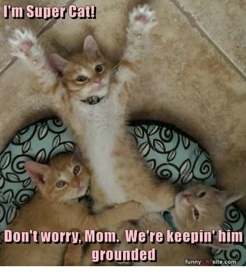 Cats Memes and Mom Im Super Cat Don t worry Mom We re keepin him grounded funny CAT site