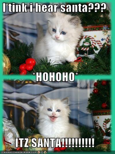 Funny cat pics funny pictures its santa cat