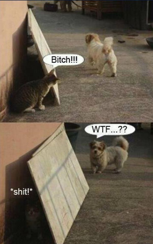 Funny cat vs dog