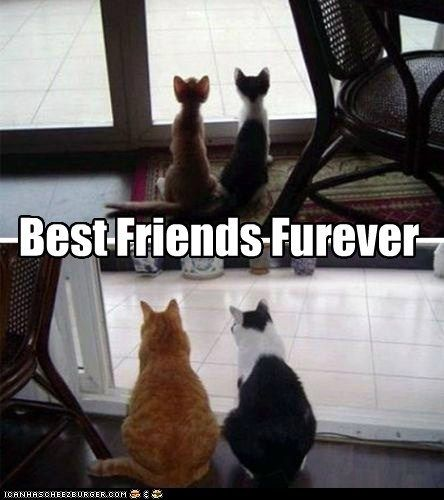 best friends best friends forever best of the week bff Cats day forever friends national best