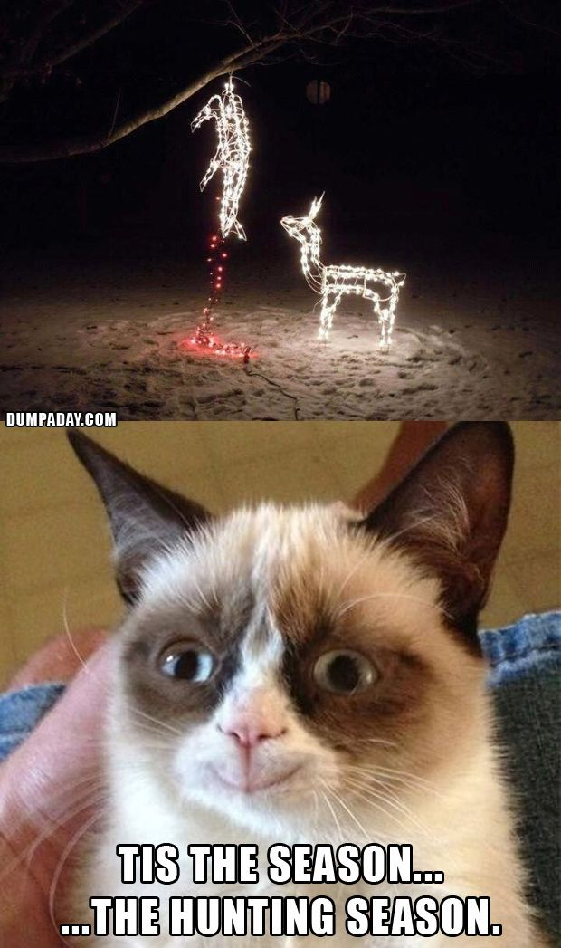 grumpy cat christmas funny christmas lights what makes grumpy cat