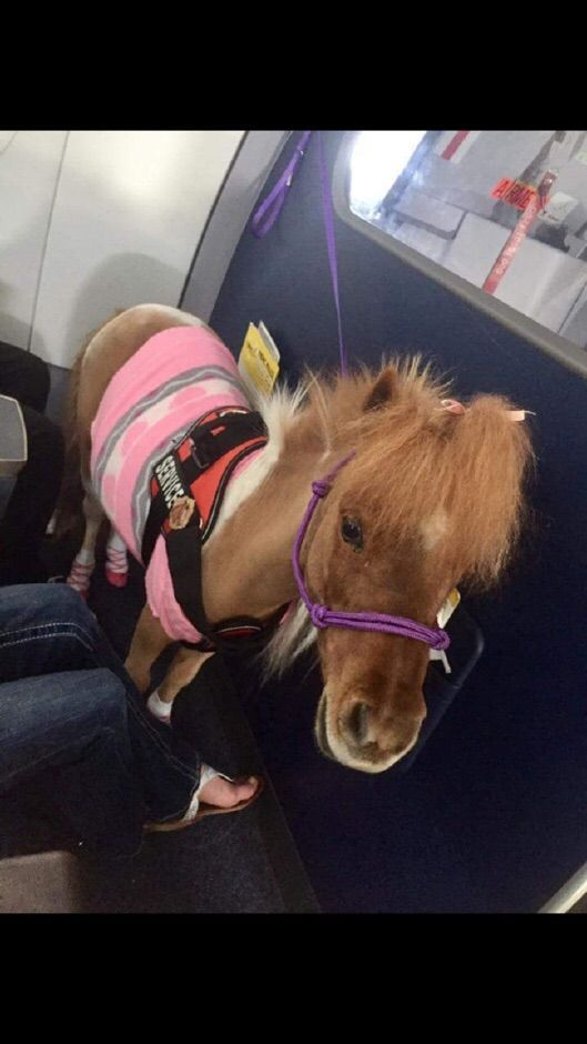 Someone brought an emotional support pony for a flight