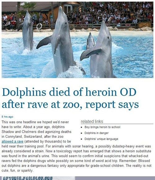 dolphins OD overdose rave ravers swiss rave Switzerland