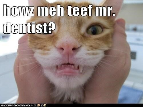 Download the Fresh Funny Cat Memes Dental