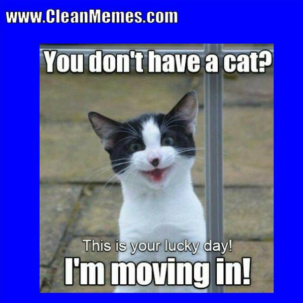 Author cleanmemesPosted on March 28 2018 Categories Cat Memes Clean Funny Clean MemesTags Cat Memes Clean Funny Clean MemesLeave a