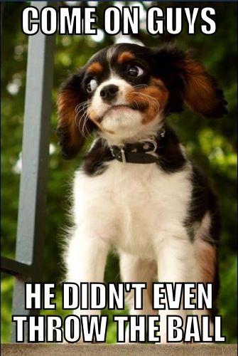 Suspicious Dog Bahahah sooo funny
