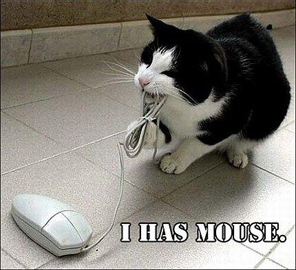 Funny cat picsfunny cute cat pics 1