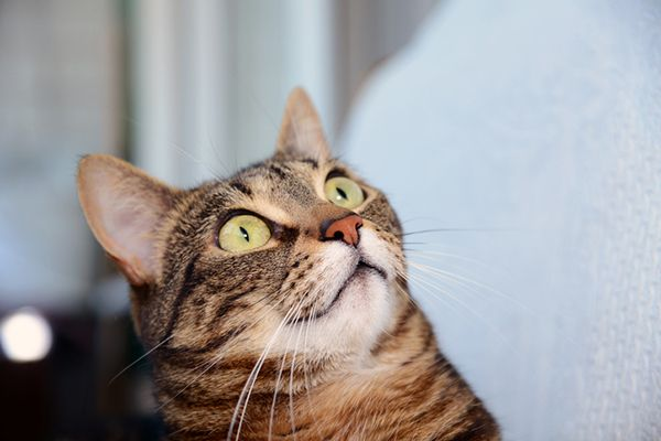 Your Cat Has a Clitoris and 5 Other Things You Didn t Know About Cat Genitalia