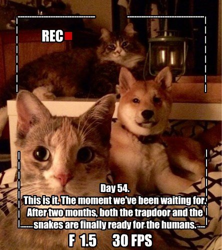 dogs evil plans The End Cats diary