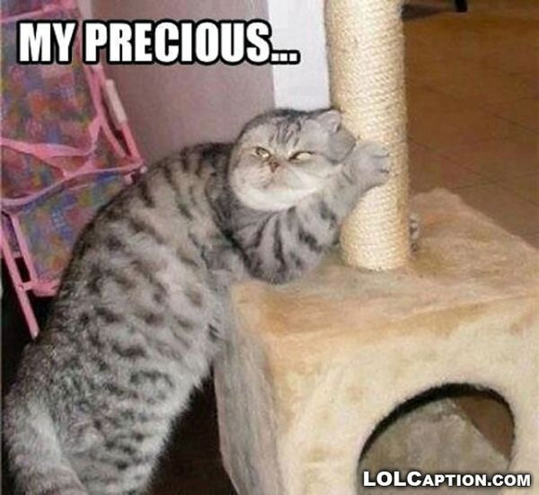 Cute funny fat cat pictures captions