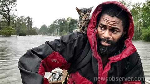 Kitten clings for life as man awaits rescue from Florence The cat s name says it all