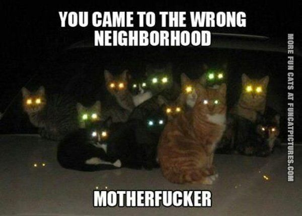 funny cat pics wrong neighborhod