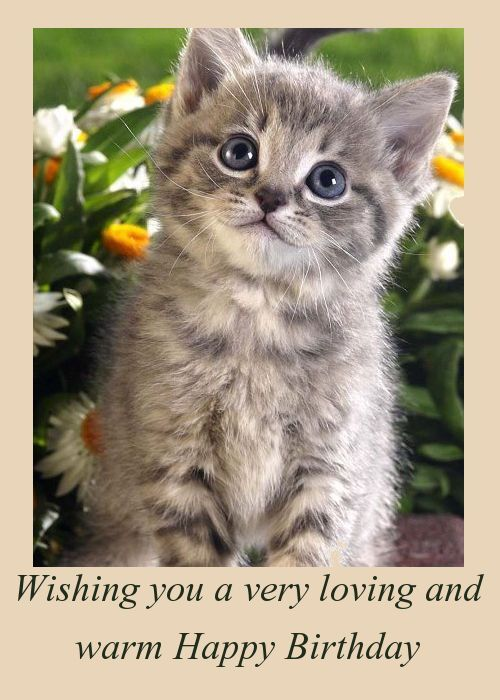 Funny Birthday Cards with Cats Inspirational 88 Best Cat Birthday Cards Pinterest
