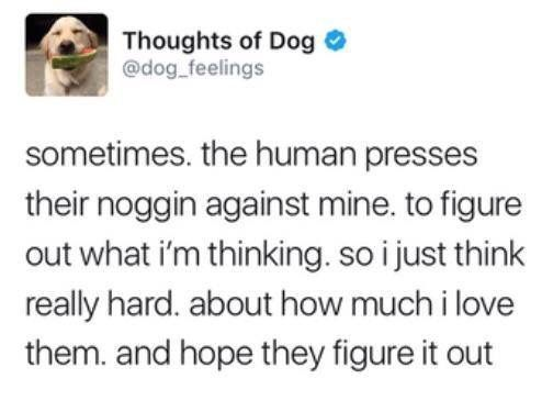 Wholesome doggo Animal Memes
